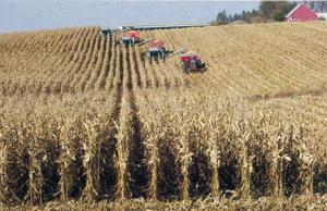 Corn harvest on the Driscoll Farm. Photo by Elliott Driscoll.