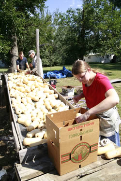 Jim Rowh (center,) washes organic butternut squash with siblings