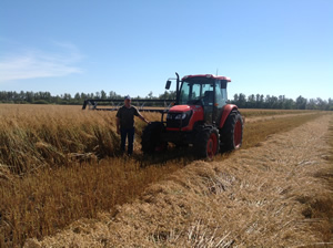 Terry Sheehan poses for a picture during the 2013 organic oat harvest